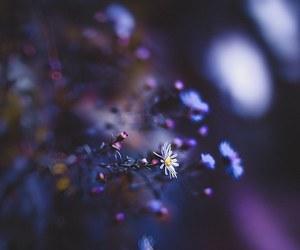 Image by Klaudia Gyuris