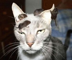 cat, mouse, and funny image