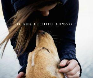 dog, girl, and hipster image