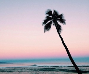 beach, ocean, and palms image
