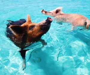 pig, bahamas, and beach image