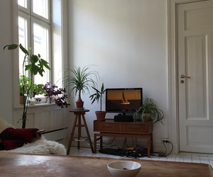 interior, house, and plants image