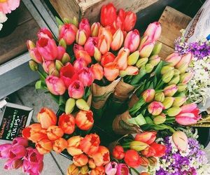 colerful, tulips, and flower image