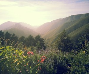 flowers, green, and mountains image