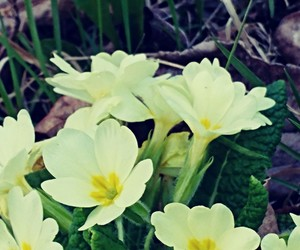 spring, ilovespring, and flowers image