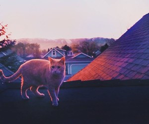 cat, animal, and sunset image