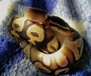 animal, baby, and reptile image
