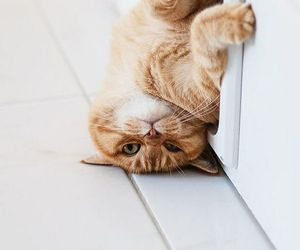animal, cat, and funny image