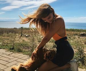 beauty, dog, and german image