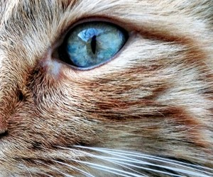 cat, eye, and kitty image