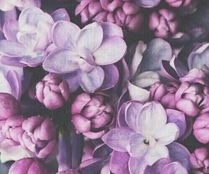 flowers, purple, and wallpaper image