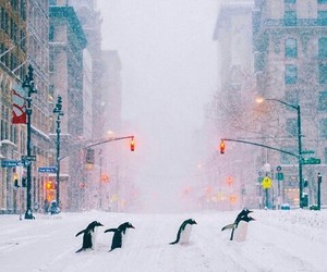 penguin, city, and snow image