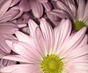 flash, flower, and pink image