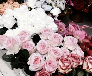 roses, love, and spring image
