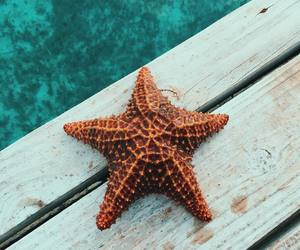 ocean, starfish, and blue image