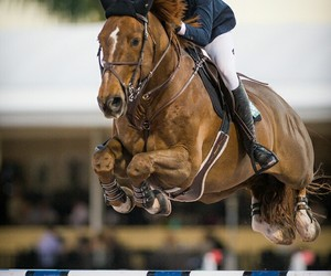 animals, horse, and show jumping image