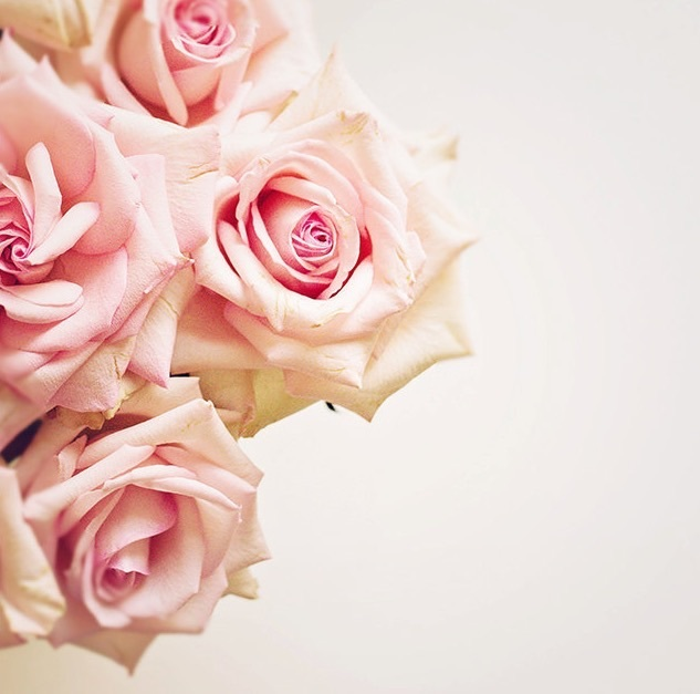 chic, rose, and flowers image