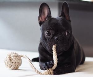 black, dog, and puppy image