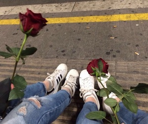 rose, tumblr, and flowers image