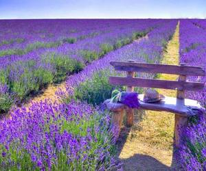 flowers, france, and lavender image