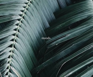 green, mood, and plants image