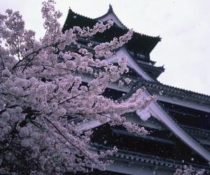 japan, sakura, and landscape image