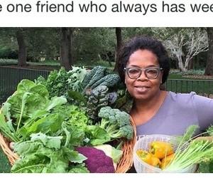 memes funny image