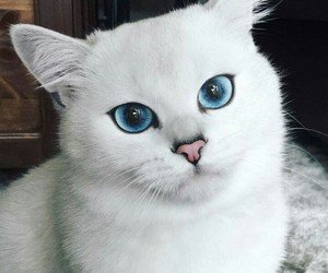 cute face and big blue eyes image