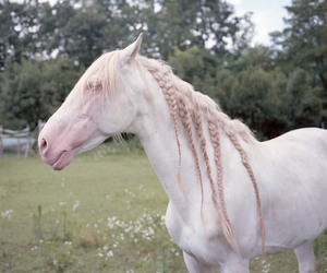 horse, white, and braid image