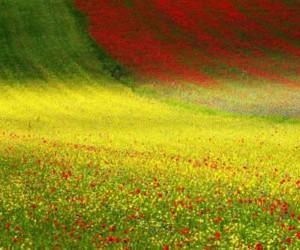 belleza, naturaleza, and campo image