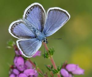blue, butterfly, and garden image