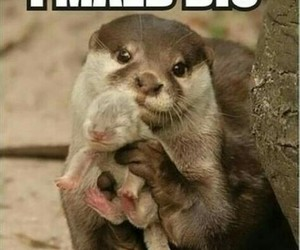 funny, baby, and animal image