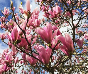 flowers and magnolia image