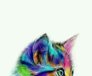 cat and colors image