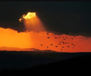 bird, clouds, and nature image
