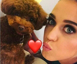 77 Images About Katy Perry Animals On We Heart It See More About