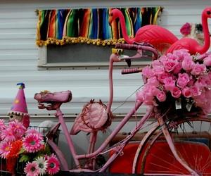 photography, pink, and pink bike image