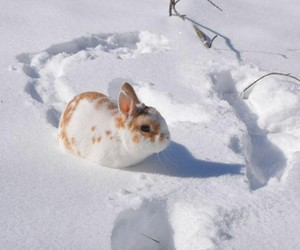 bunny, pet, and snow image