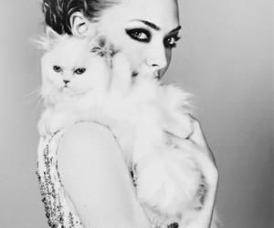 cat, amanda seyfried, and Elle image