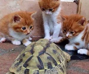 cat, kitten, and turtle image