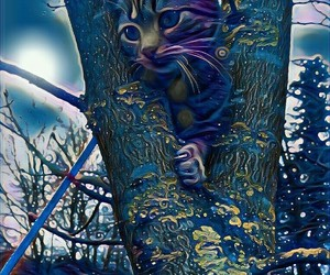 blue, kitten, and cat image