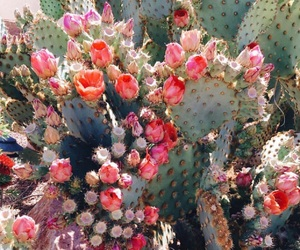 flowers, nature, and nopal image