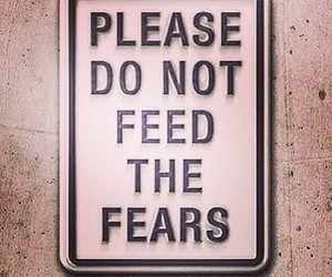 fear, feed, and quote image