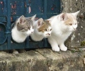 animal, friendship, and cat image