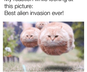 aliens, cat, and funny image