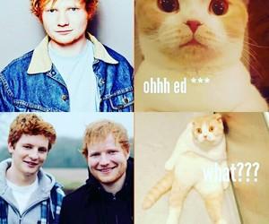 cat, funny, and edsheeran image