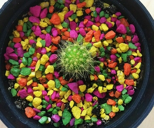 cactuslover image