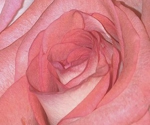 aesthetic, theme, and rose image