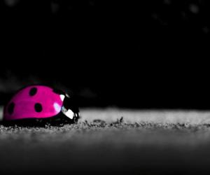 pink and ladybug image