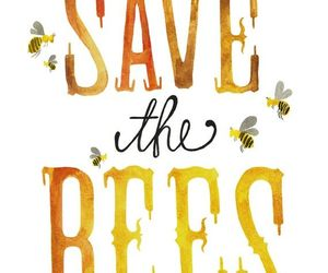 animal rights, bees, and compassion image